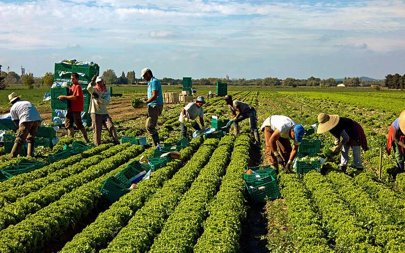 Koronawirus we Francji: Brakuje rąk do pracy w rolnictwie