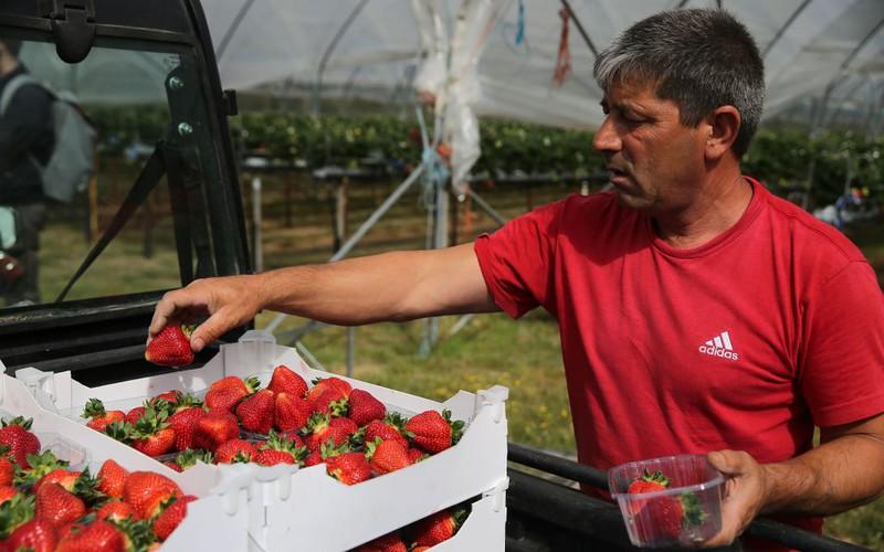 Ukraińców zastąpią bezrobotni Polacy?