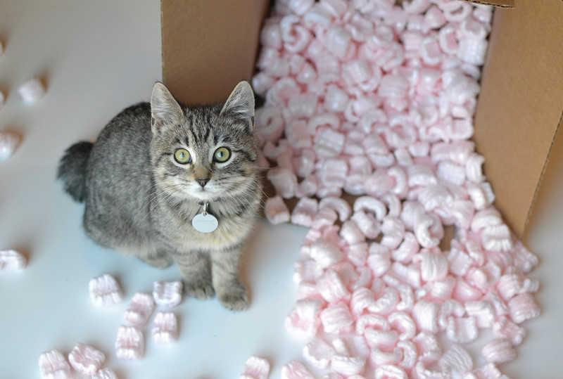 Izrael: Kot 19 dni podróżował w kontenerze z cukierkami, przeżył dzięki słodyczom