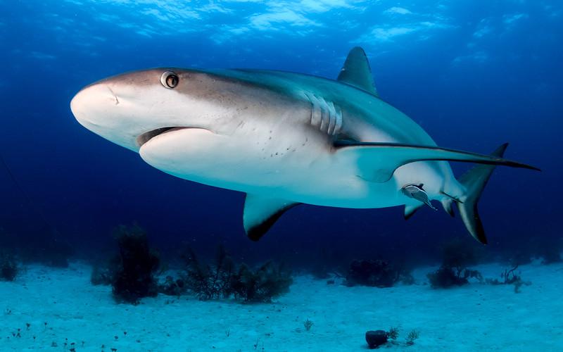 Rekin u wybrzeży Bournemouth? Ewakuowano plażę