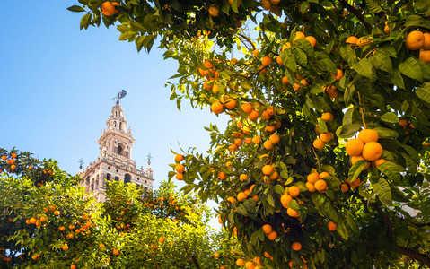 W Sewilli prąd wytwarza się z... pomarańczy