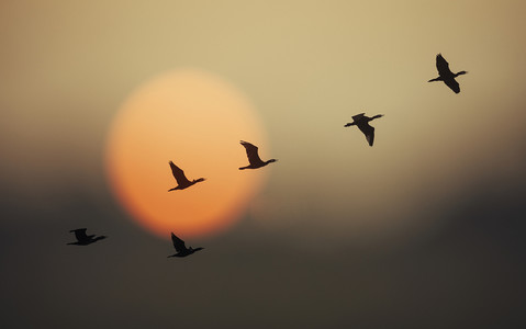 Popatrz w niebo! Ptaki wracają z emigracji