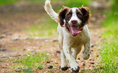 Sprzątanie po psie w Wielkiej Brytanii