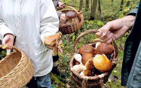 Zbieranie grzybów w Wielkiej Brytanii